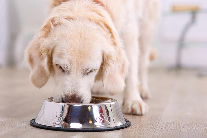 Food and Treats