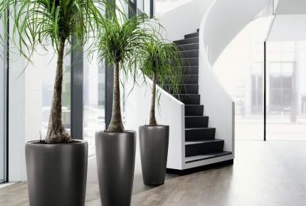 Indoor Modern Planters