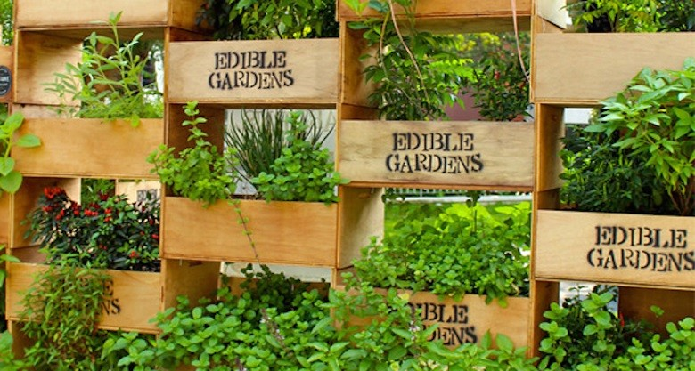 Genial Growing Plants From Seed Is A Great Way To Create Your Own Edible Garden