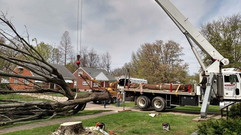 commercialtreeservice