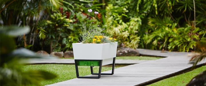 self_watering_plants