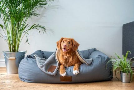 happy dog in a dog bed